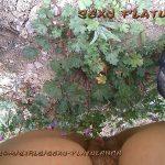 SexyFlatulence – Forrest Dump Scatshop